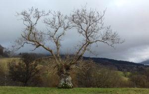 Tree ©2017 Pam Grant